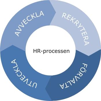 De fyra stegen i HR-processen